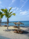 Plaża z palm wyspami kanaryjska Fotografia Royalty Free