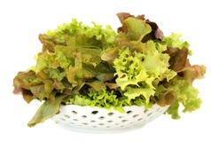 Plaat met salade Stock Fotografie