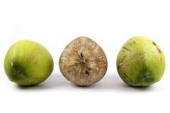 Plaats - Drie van Kokosnoot met Verschillen bruin in Midden naast elkaar royalty-vrije stock fotografie
