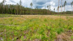 Plaats van het verminderen van bomen in de zomer Stock Foto