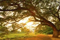 Plaats voor het rusten onder de boom Stock Foto