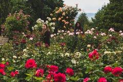 Plaatselijke bewoners die rozen bekijken in Internationale Rose Test Garden royalty-vrije stock afbeeldingen