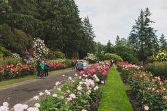 Plaatselijke bewoners die rozen bekijken in Internationale Rose Test Garden stock foto