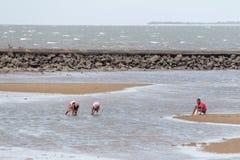 Plaatselijke bewoners die schaaldieren langs het strand verzamelen Royalty-vrije Stock Foto