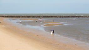 Plaatselijke bewoners die schaaldieren langs het strand verzamelen Stock Afbeelding