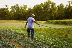 Plaatsende irrigatie neer Royalty-vrije Stock Foto