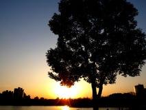 Plaatsende zon en de boom Stock Afbeelding
