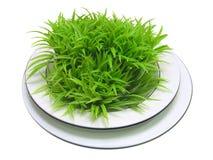 Placa blanca con las hojas verdes Imagen de archivo libre de regalías