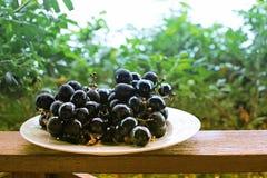Placa blanca con las uvas negras en el balcón Fotografía de archivo libre de regalías