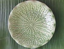 Placa cerâmica verde vazia em fundos verdes da folha da banana para o página da web, estilista do alimento, restaurante gourmet,  imagens de stock