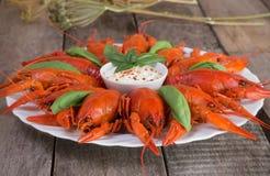 Placa com as lagostas fervidas vermelho Foto de Stock