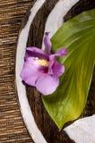 Placa con la flor foto de archivo libre de regalías