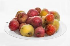 Placa con las manzanas ecológicas Imagen de archivo libre de regalías