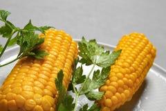 Placa con las mazorcas de maíz maduras y perejil en fondo gris imagen de archivo libre de regalías