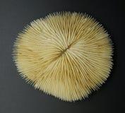 Placa Coral Skeleton Foto de Stock Royalty Free