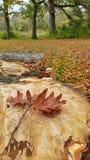 Placa da árvore Imagens de Stock Royalty Free