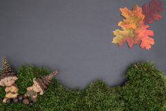 Placa da ardósia com musgo, madeira Fotos de Stock Royalty Free