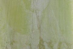 Placa da textura do teste padrão do fundo da folha do verde do detalhe da natureza foto de stock