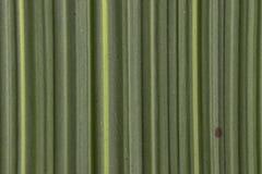 placa de bambu da textura do teste padrão do fundo da folha da natureza fotografia de stock
