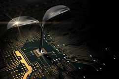 Placa de circuito macro com planta futurista Imagens de Stock