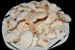A placa de cogumelos de Shiitake cultiva a maneira orgânica tradicional foto de stock