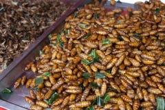 Placa de lagartas fritadas em uma tenda do mercado na estrada de Khao San, Banguecoque, Tailândia fotografia de stock royalty free