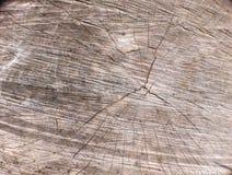 Placa de madeira Fotografia de Stock