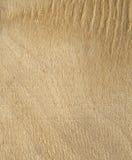 Placa de madeira leve Fotografia de Stock Royalty Free