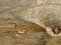 Placa de madeira velha comida por sem-fins e por besouros imagens de stock royalty free