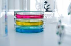 Placa de Petri en laboratorio Foto de archivo libre de regalías