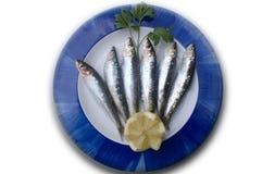 Placa de sardinas frescas Imagen de archivo libre de regalías