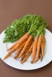 Placa de zanahorias recién cosechadas Imagenes de archivo