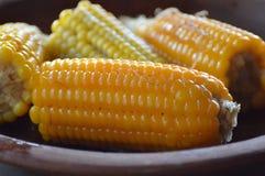 Placa del maíz Foto de archivo libre de regalías