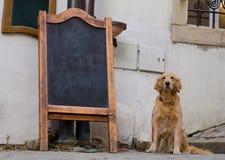 Placa do menu do restaurante com cão bonito fotografia de stock royalty free