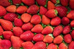 Placa por completo de stawberries rojos Imagen de archivo