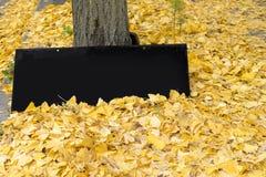 A placa preta vazia do sinal e as folhas amarelas da nogueira-do-Japão caem no floo Imagens de Stock Royalty Free