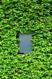 Placa vazia cercada pelas folhas da hera Fotos de Stock Royalty Free
