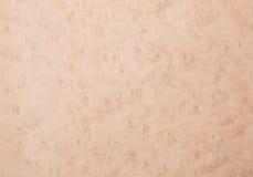 Placage en bois d'érable de l'oeil de l'oiseau Photographie stock libre de droits