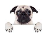 Placard banner dog Royalty Free Stock Image
