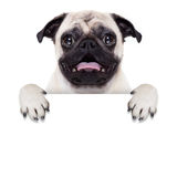 Placard banner dog Royalty Free Stock Images