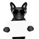 Placard dog Stock Images