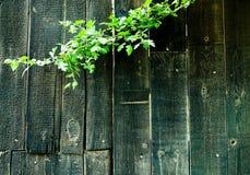 Placas coloridas obscuridade com planta Foto de Stock Royalty Free