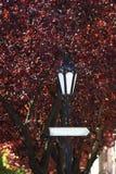 Placas de calle y luces Foto de archivo