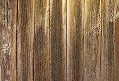 Placas de Cardon Fotografia de Stock