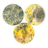 Placas de Petri Foto de archivo libre de regalías