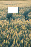 Place for advertisement. In the corn plantation Royalty Free Stock Photography