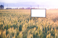 Place for advertisement. In the corn plantation Stock Photo