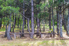 Place for camping and relaxation in a pine forest, monochrome Royalty Free Stock Photo
