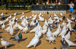 Place crowded of Birds. Place in Sevilla, Spain, crowded of birds waiting for the food given by a child