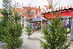 Place de Livu avec des arbres de Noël dans la vieille ville à Riga Image stock